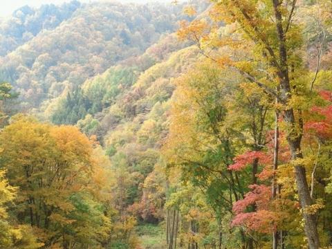 20121027紅葉風景.JPG